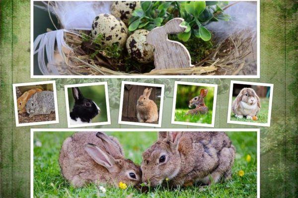 rabbit-2133899_1280